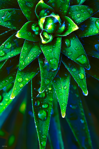 Morning Dew On Plant