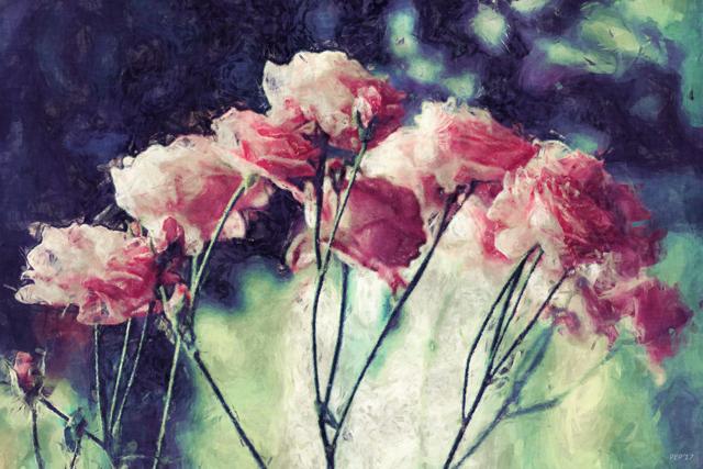 Pink Rose Flowers