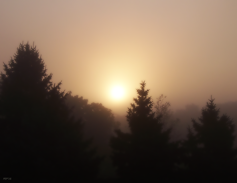 Sunrise Through Morning Fog