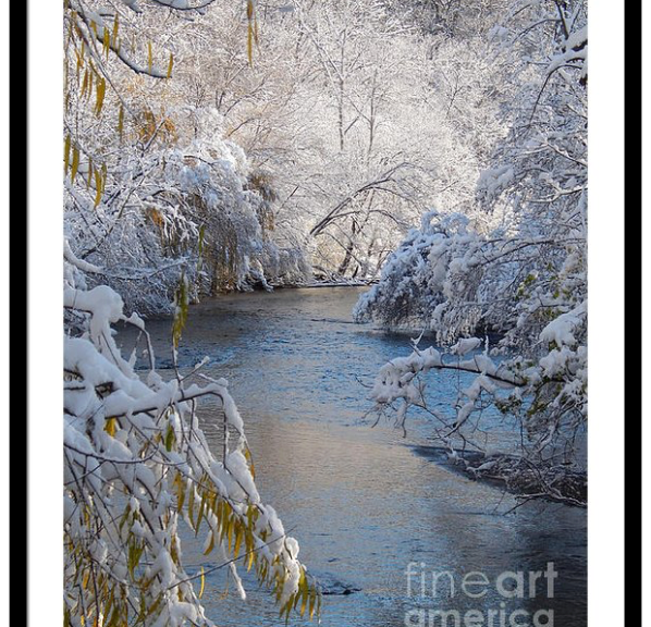 Trees Covered In Snow Framed Print