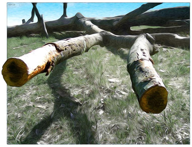 Fallen Tree Landscape