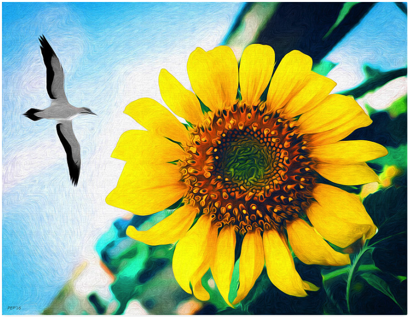 Soaring Bird Sunflower