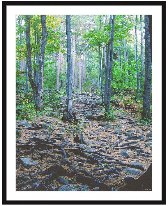 Vintage Rocky Mountain Trail Print