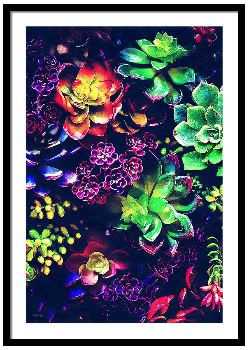 Colorful Plants