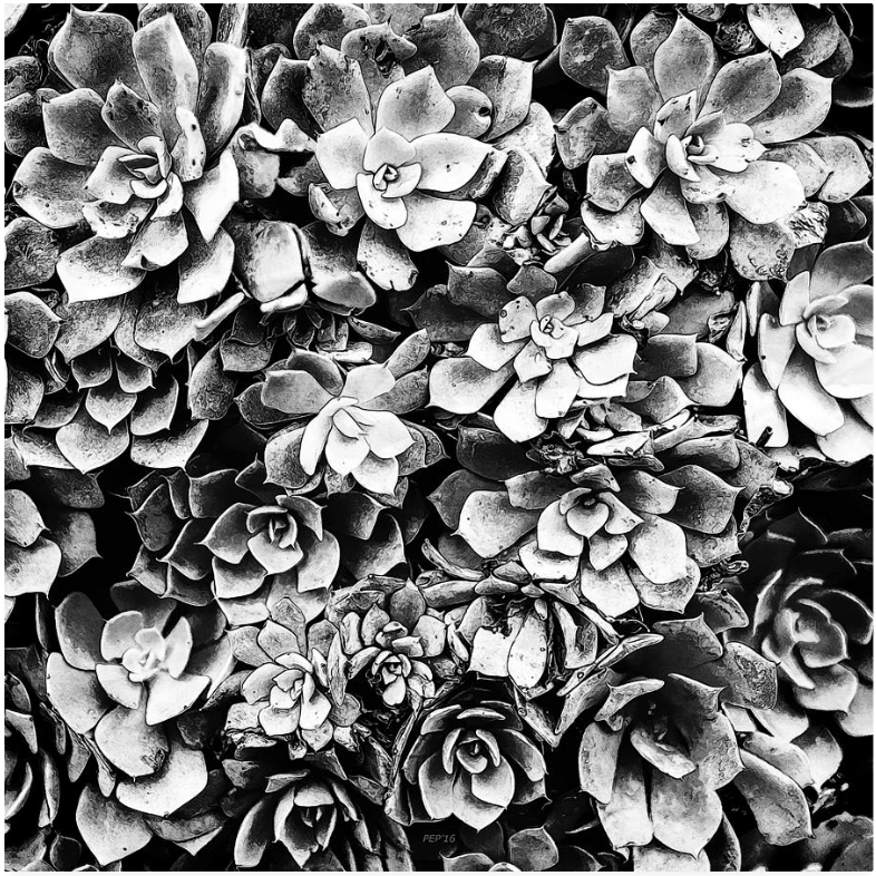 Black And White Plants