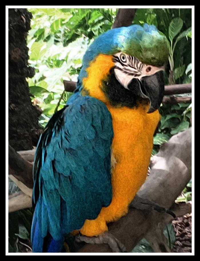 Tropical Hawaiian Parrot