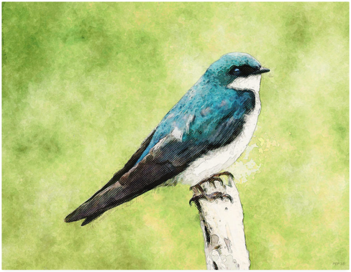 Blue Bird Perched On Branch