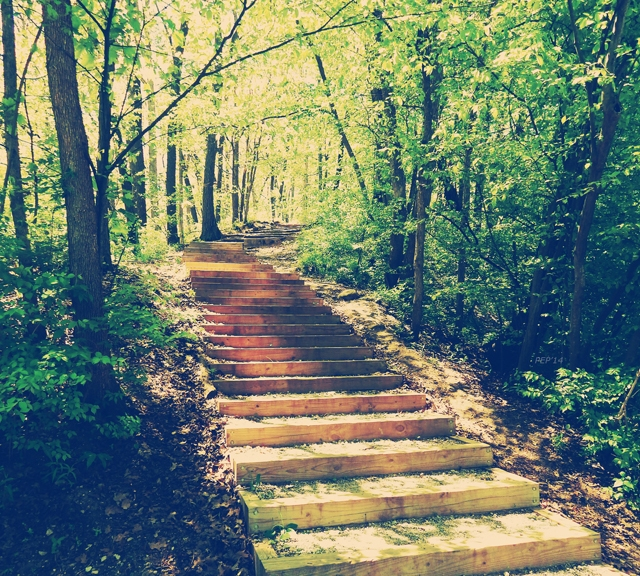 Stairway Into The Forest