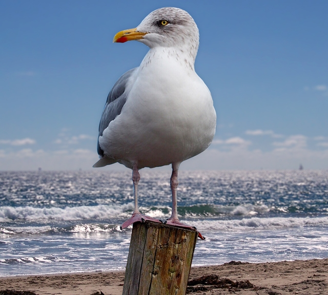 Seagull On The Shoreline