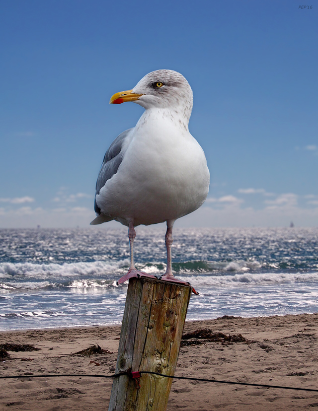 Seagull On The Shoreline