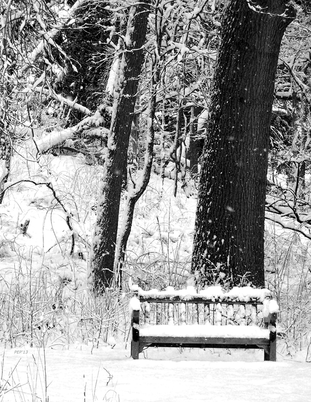Bench At Nichols Arboretum In Winter