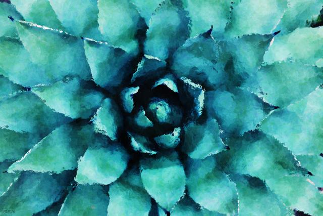 Turquoise Succulent Plant