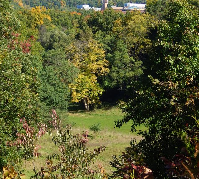 Autumn In Ann Arbor