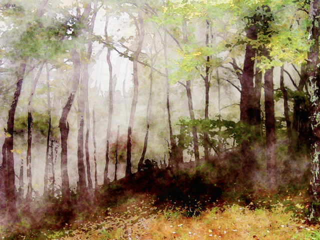 Tennessee Forest Fog