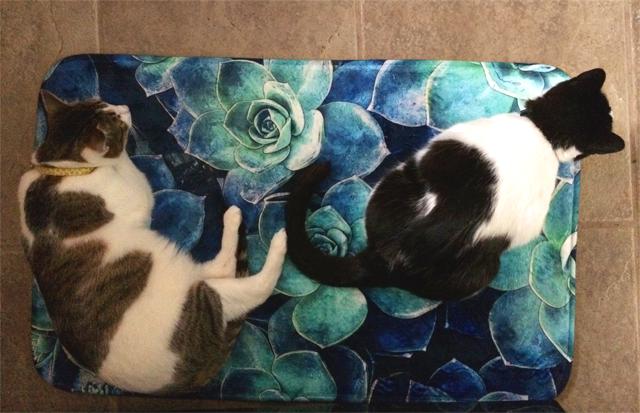 Customer's Cats Love Bath Mat, Too