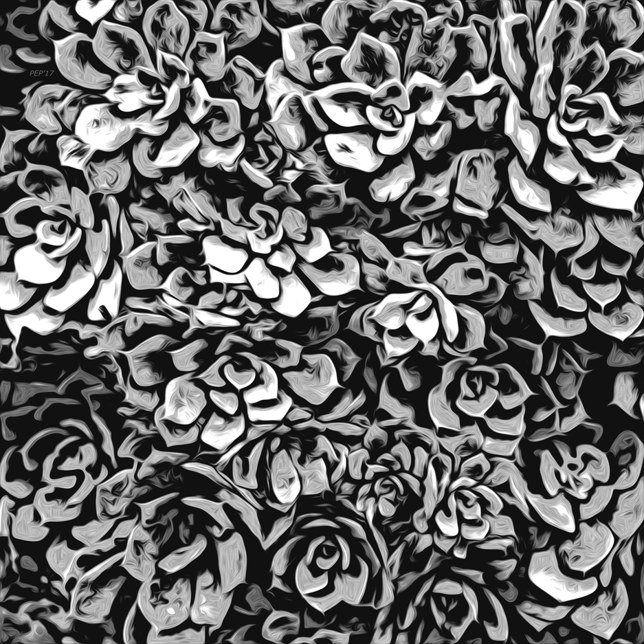 Plants of Black And White