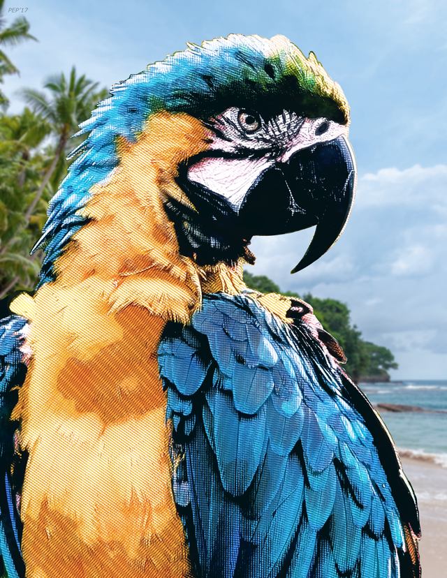 Tropical Macaw Parrot