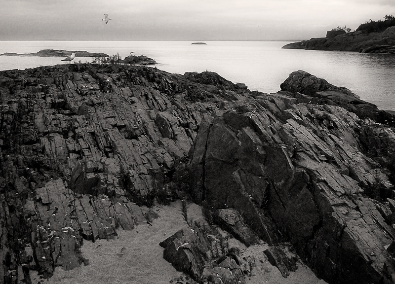 Seagulls Along The Shore
