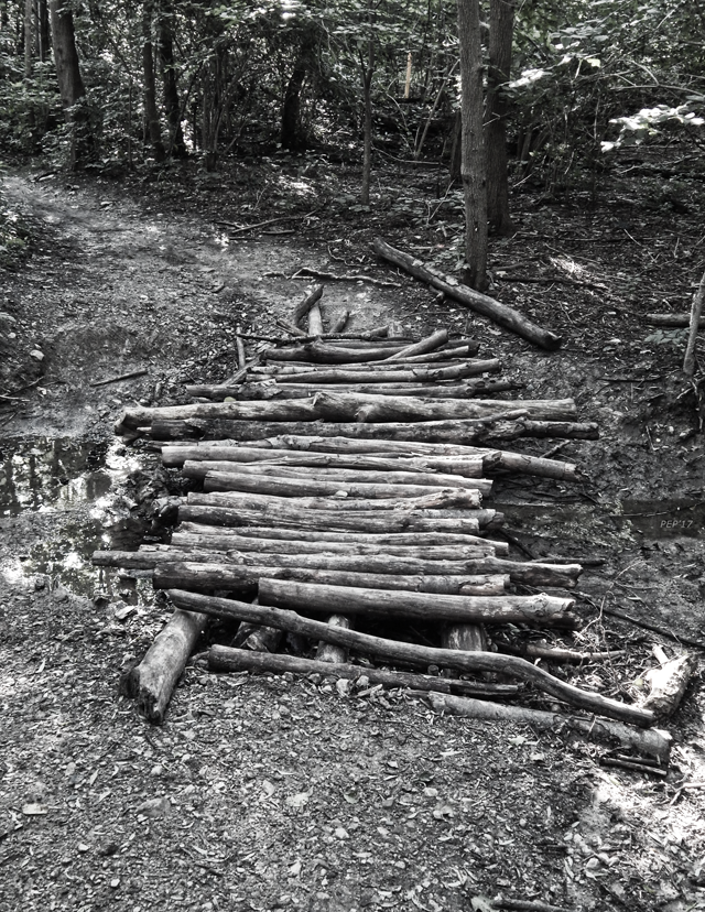 Bridge of Logs