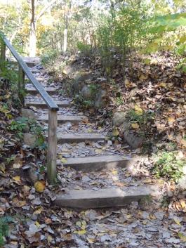 Autumn At Nichols Arboretum