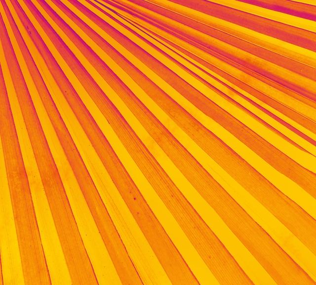 Pop Art Palm Frond