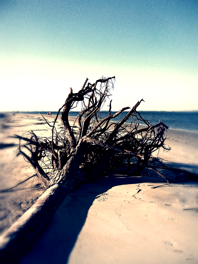 Driftwood At Low Tide