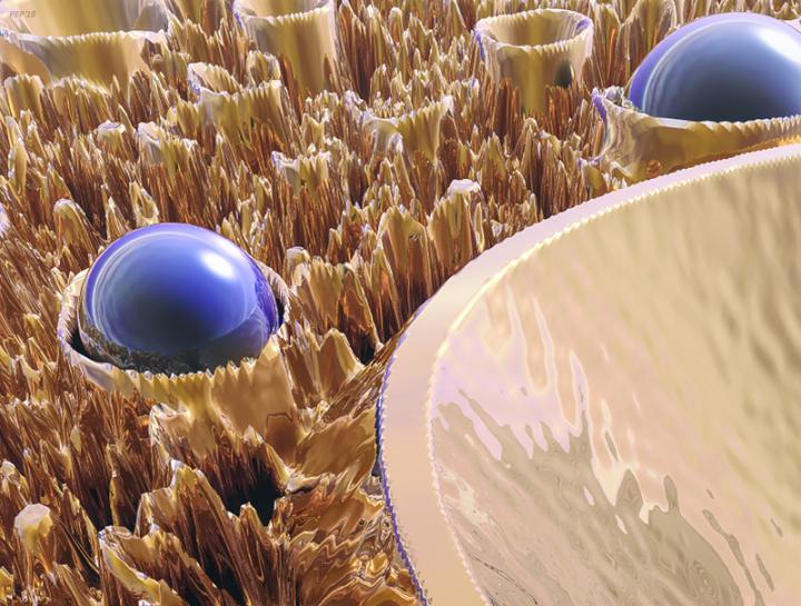 Macro Fractal With Blue Spheres