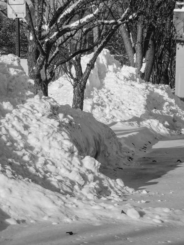 Black And White Plowed Snow