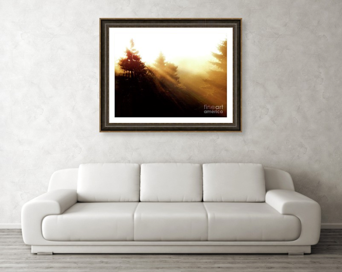 Sunrise Behind Pine Trees Framed Print