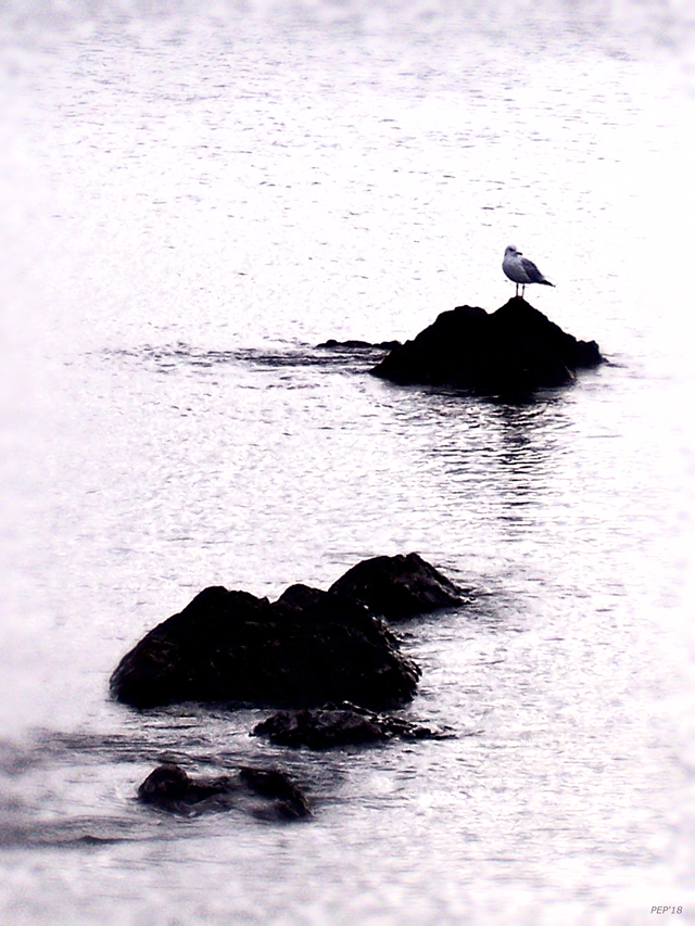 Seagull Waiting