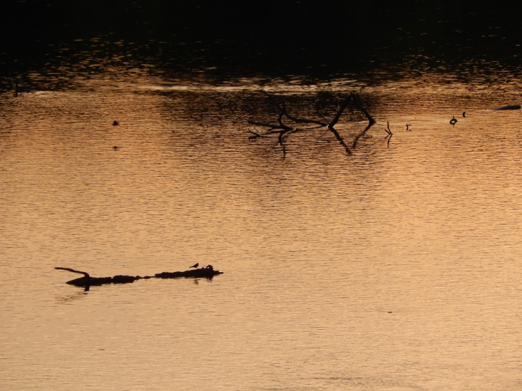Morning Sun Reflects On Water