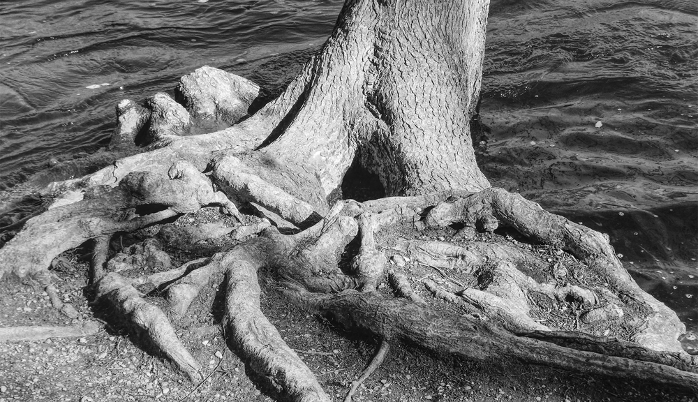 Gnarly Roots Tree
