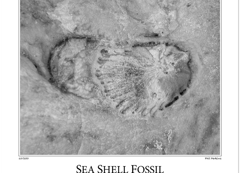 Fossil of Sea Shell