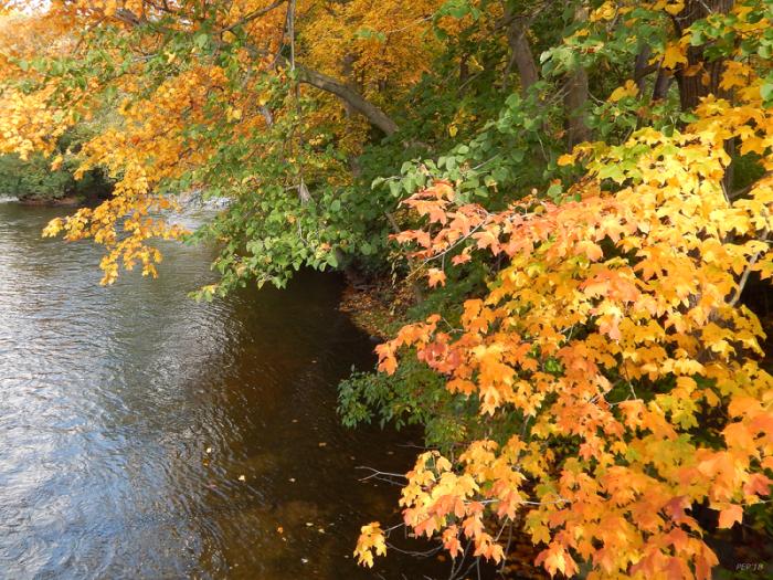 Autumn Along The Huron River