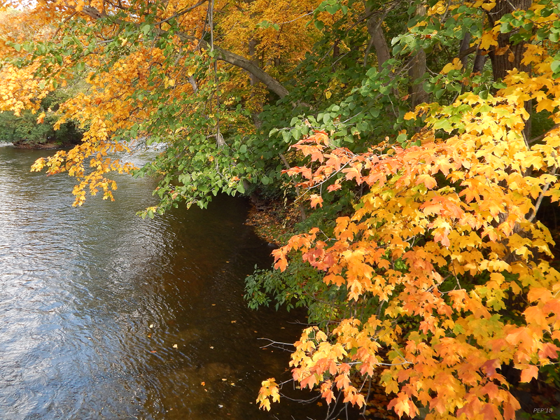 Autumn Along The Huron River