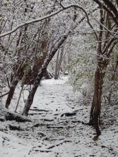 Winter Walk In The Woods