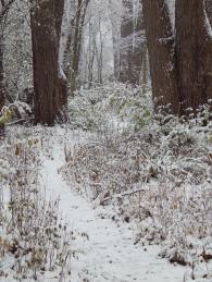 nov18_snow_day4