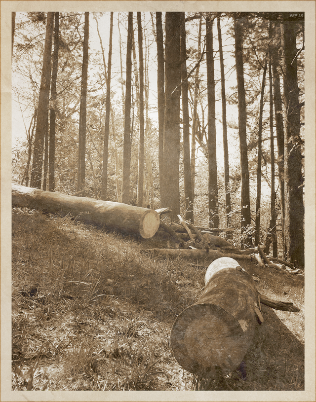 Vintage Forest Hillside