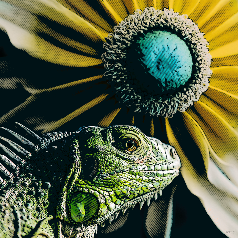Iguana And Sunflower