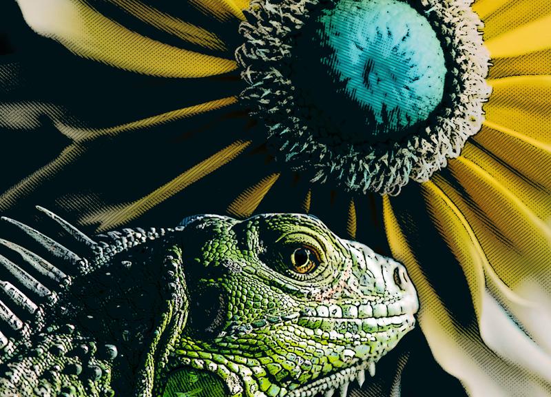 Iguana And Sunflower