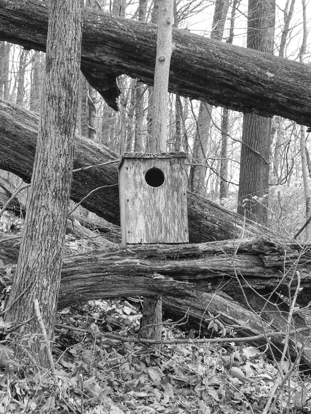Old Birdhouse In Forest